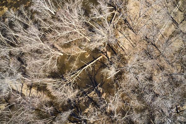 2019 UWL Drone Floodplain Forest Goose Island Park 0017