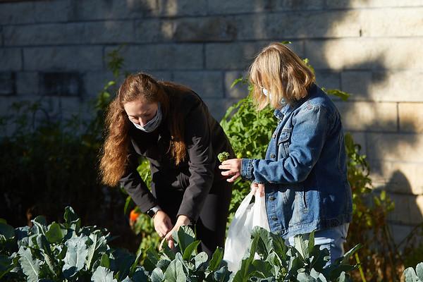 2020 UWL Victory Garden Harvest at Aptiv 0091