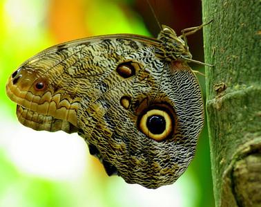 DA014,DN,Moth