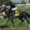 20201106 Breeders Cup (56)