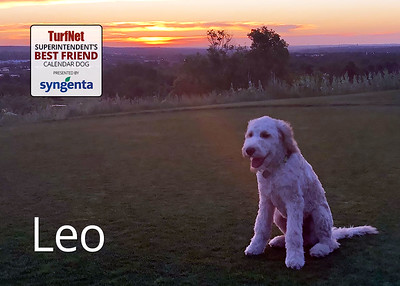 4 month old GoldenDoodle  The Club at Rolling Hills, Arvada, CO