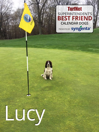 2-1/2 year old English Springer Spaniel  Portsmouth Country Club, Portsmouth, NH