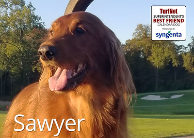 4 year old Irish Setter/Golden Retriever mix  Waynesborough Country Club, Plymouth Meeting, PA