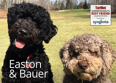 1/7 year old Portuguese Water Dog/Italian Water Dog  Brightwood Golf & Country Club, Dartmouth, NS