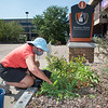 Volunteers weeding plantings prior to fall semester at SUNY Buffalo State College.