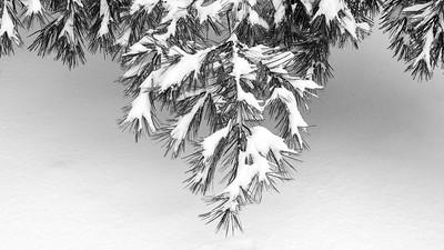 DA118,DB,Freshly Fallen Snow