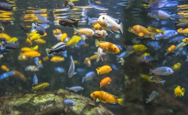 200722 Aquarium Enterprise 2