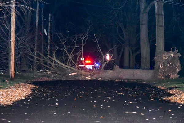 A large was down Sunday night on the 1300 block of Maple Avenue.