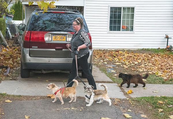 "201105 Enterprise 1<br /> James Neiss/staff photographer <br /> Niagara Falls, NY - Cindy Chazen said whenever she walks her dogs Harley and Cookie, TOT the neighborhood cat joins them every time. The trio were spotted on 67th Street and when asked about the strange pairing Chazen said, ""My neighbors call them the three dogs. Tot follows us everywhere we walk."""