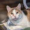 200129  Pet of the Week