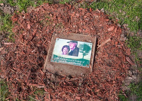 200424 Arbor Day Planting 3