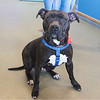 200108  Pet of the Week