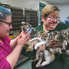 James Neiss/staff photographer <br /> Sanborn, NY - Behind the scenes It's business as usual at the Niagara County SPCA as Kennel Staffer Coryn Hill, left and Community Outreach Coordinator Stacy Rainey gather up kittens too young for adoption for socializing with other cats before being put up for adoption.