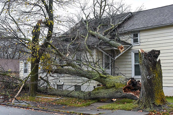 A tree fell on to a house at 13th and Niagara Avenue during Sunday's windstorm.