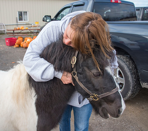 201111 Animal Sanctuary 3<br /> James Neiss/staff photographer <br /> Pendleton, NY - Shannon Pearson, VP and Volunteer Coordinator gives Oreo the horse a hug. Pearson plans to take over the sanctuary and is looking for donations of hay, bagged food and cash donations. Those willing to help should drop off donations at the back barn.
