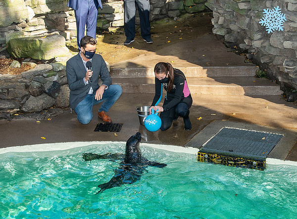 """201023 Aquarium Prediction 1 James Neiss/staff photographer  Niagara Falls, NY - Stryker the Harbor Seal at the Aquarium of Niagara chose Cold over Frigid as his prediction for this winter's weather, presenting his prediction to Senior Trainer Hallie Torre and Executive Director Gary Siddall. The Aquarium of Niagara and local energy company NOCO teamed up to make sure Western New Yorkers are prepared for winter by tossing two balls into the Harbor Seal pool for Stryker to choose between. !    FOR IMMEDIATE RELEASE   MEDIA ALERT/PHOTO OPPORTUNITY Harbor Seal to Predict Western New York's Winter Outlook   What:      The Aquarium of Niagara and local energy company NOCO are teaming up to make sure Western New Yorkers are prepared for winter! In a Groundhog Day take on winter, """"Stryker"""" the harbor seal will predict whether this winter season will be cold or frigid.   Visuals and opportunities to include: Stryker predicting the winter weather outlook Interviews with representatives from both the Aquarium and NOCO News-you-can-use winter heating and sustainable energy tips from NOCO Heating & Cooling Who:  Gary Siddall, executive director, Aquarium of Niagara Jim Newman, president, NOCO When:  Friday, October 23 at 10 a.m. Where:  Aquarium of Niagara 701 Whirlpool Street Niagara Falls, NY 14301 Background:  Both Stryker the harbor seal and NOCO know a thing or two about winter in Western New York. Stryker and his rescued seal friends spend winters in their comfortable outdoor habitat at the Aquarium of Niagara where they naturally adapt to all kinds of extreme weather conditions. NOCO has been providing home heating services to the WNY community since 1933. This year they're working together to determine what kind of winter we have ahead of us. Will the winter season be cold or colder than usual and what can we do to prepare? Check in with Stryker to find out! Media Contacts: Aquarium of Niagara: Christine Streich, Director of Communications, (716) 390-9020,cstreich@aquar"""