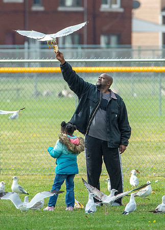 201008 Enterprise 1<br /> James Neiss/staff photographer <br /> Niagara Falls, NY - A gull swoops in and snatchs a piece of bread out of the hand of Calvin Finklea during a visit to Hyde Park with his family. Legacy Finklea, 6, tries her hand at feeding the gulls also.