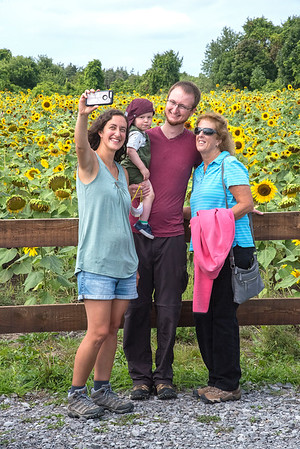 200828 Sunflowers 3<br /> James Neiss/staff photographer <br /> Cambria, NY - The Driscoll's of West Seneca, Angie, Isaac, 14mos and Clark came with grandma Tracy Klinczark to enjoy the afternoon at Sunflowers Of Sanborn.