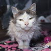 200115  Pet of the Week