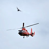200529 Enterprise<br /> James Neiss/staff photographer <br /> Niagara Falls, NY - A startled bird gets out of the way of a Coast Guard helicopter taking off at the Niagara Falls Airport.