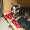 200210 Love Canal Dog