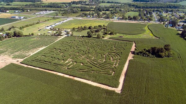 200828 Sunflowers 4<br /> James Neiss/staff photographer <br /> Cambria, NY - The Sunflowers Of Sanborn feature a huge corn maze and fields where visitors can cut their own flowers.