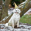 201230 Enterprise<br /> James Neiss/staff photographer <br /> Youngstown - This sculptured pooch is all ready to bring in the new year on a Carrollwood Drive lawn in Youngstown.