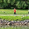 200914 Enterprise 2<br /> James Neiss/staff photographer <br /> Lockport, NY - A woman walking with a companion along the Erie Canal sprinting into a jog and flapping her arms looked ready to take flight with the geese in her path.