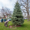 200424 Arbor Day Planting 2<br /> James Neiss/staff photographer <br /> Lockport, NY - Arbor Day Planting - Gretchen O'hare places flowers at a  tree dedicated to the memory of  her neighbors Carl and MaryLou Blackley. The tree is part of the City of Lockports Arbor Day plantings at the corner of East and Harrison Avenues.