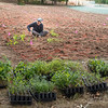 200911 Planting Enterprise 2<br /> James Neiss/staff photographer <br /> Niagara Falls, NY - Samantha Catella, a postdoctoral fellow with the University of Pittsburgh, in collaboration with NY State Parks, is planting a native meadow along a section of the old Niagara Scenic Parkway near the Findlay Drive exit. The meadow plantings include Milkweed, Showy Tick Trefoil, Butterfly Bush and Bush Clover, to name a few.