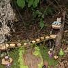 200815 Fairy House Festival 3