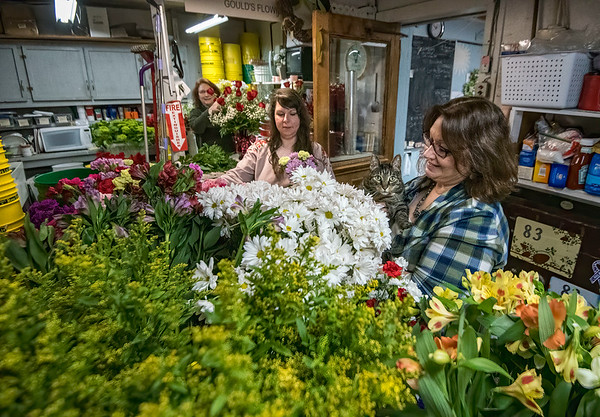 James Neiss/staff photographer <br /> Lockport, NY - It's all hands on deck, including Leo the kitty, as crew, Nancy Farley, Kylee Peters and owner Janet Gould from get ready for Valentines Day at Gould's Flowers.