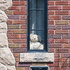 200420 Happy Enterprise 3<br /> James Neiss/staff photographer <br /> Niagara Gazette, NY - Area residents like this one on Vanrensselaer Avenue are joining in the Teddy Bear Hunt, a national trending game during the Coronavirus for children.