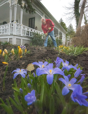 James Neiss/staff photographer <br /> Youngstown, NY - Spring has sprung at the home of Steve Brown on Main Street in Youngstown where he was seen tending to his landscaping.