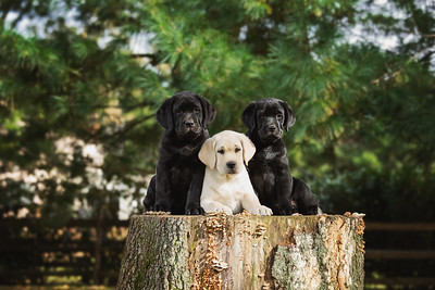 AndiePuppies001a