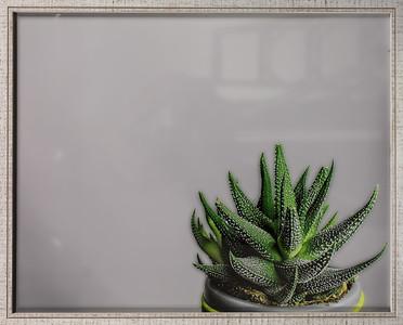 Danielle Tuttle - Zebra Plant