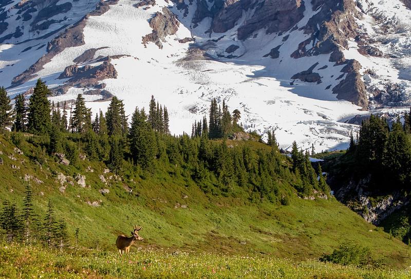 August- Mount Rainier