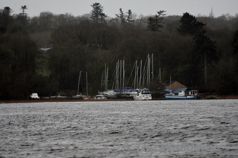 Viewing the private marina at Youghal Quay, Lough Derg.  Sun 02.02.20
