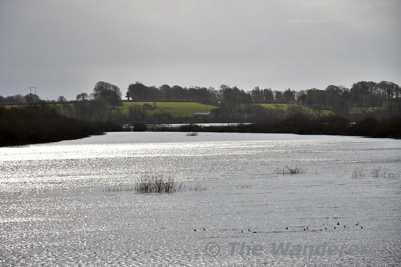 Ballycar Lough on Sunday 8th March at lunchtime. With the recent heavy rain the water levels has risen and flooded the Limerick to Ennis section of the Western Rail Corridor at this location. It will be several weeks before we see the railway open again through here. The earlier flooding at Kiltartan in the Ennis to Athenry section receded faster than expected and reopened to traffic at the start of March. Sun 08.03.20