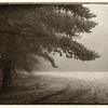 B Grade Honours, Tania Mackie - Trees in the morning mist