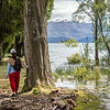 Merit, Barbara Lee - No chance today - Wanaka tree flooded