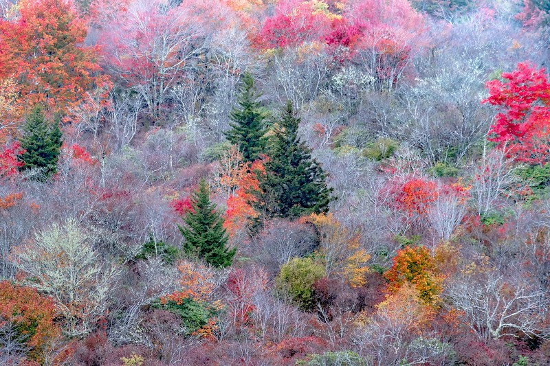 Autumn in the Appalachian Mountains Viewed Along the Blue Ridge Parkwa