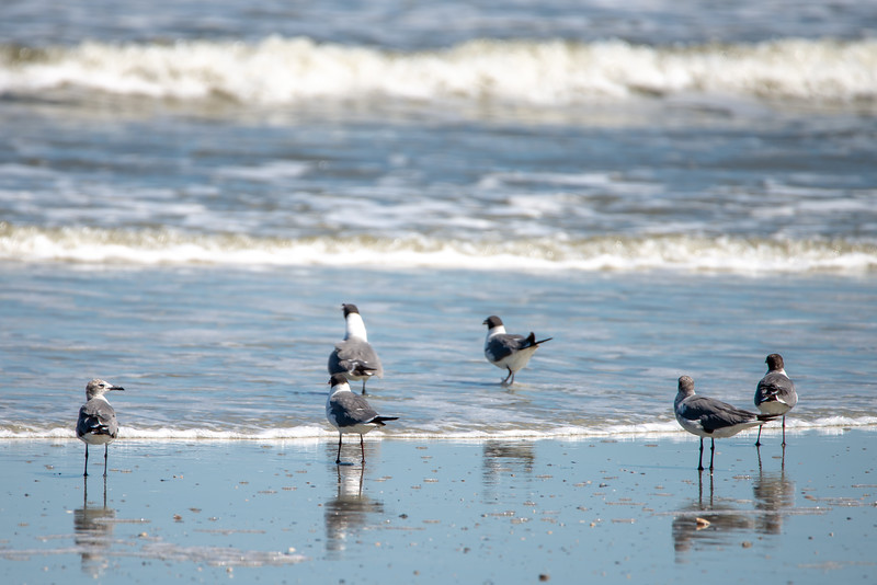 nature around hunting island state park beach in south carolina