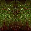 Mystery Under The Green Canopy : Symmetry Series #2