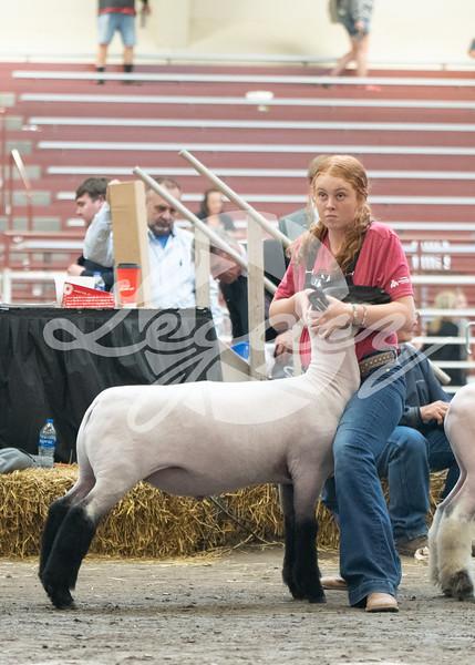 Lamb Challange Candids