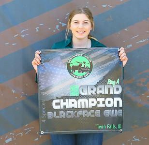 Grand_Champion_Blackface_Ewe