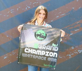 Grand_Champion_Whiteface_Ewe