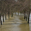 Shrewsbury floods around midday on 24th Feb 2020.<br /> An avenue of trees in Quarry Park.