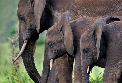 Africa-Kenya--005