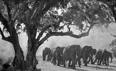 Africa-Kenya--013
